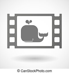balena, cornice, 35mm film