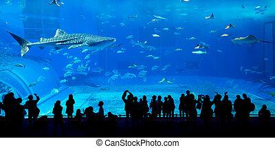 balena, gigante, acquario, squalo