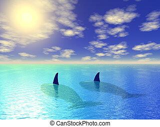 balene, blu, due, laguna