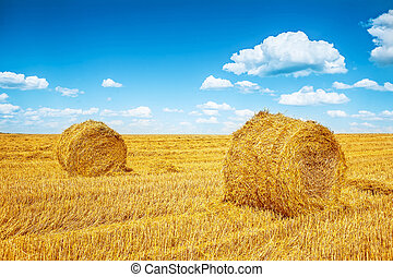 bales of a straw on harvested field in summer