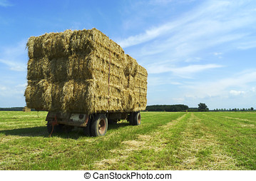 Bales of dry hay on a trailer - Bales of hay on a trailer...