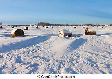 Bales of hay laying in snow on field
