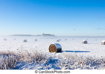 Bales of hay laying in snow