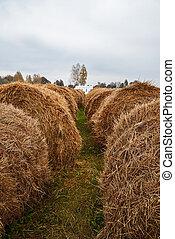 Bales of hay lie in a field