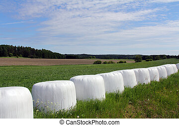 Bales of Silage on Green Field at Summer