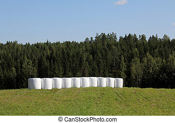 Bales of Silage on Green Summer Field