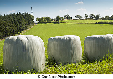 Bales of silage - Silage is fermented fodder that can be fed...