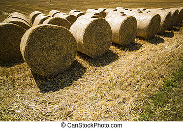 bales of straw and grain in a field - bales of straw and the...