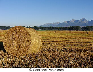 Bales of straw under the mountains
