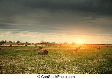 Bales on sunny field