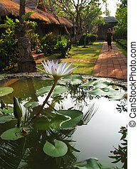 Bali: beautiful garden and bungalows from a lovely spa and...