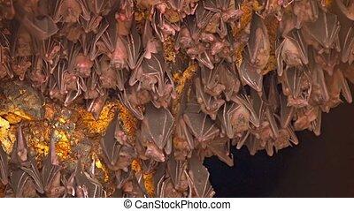 Bali, Indonesia. A flock of bats on a rock. Territory of Pura Goa Lawah Temple. UltraHD 4k footage