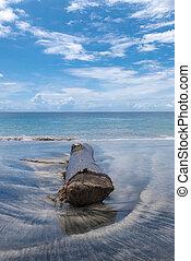 bali, isola, candidasa., albero, morto, /, tronco, spiaggia