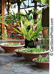 balinese, decorazione, piante