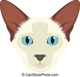 balinese, isolado, ilustração, gato, vetorial, fundo, branca