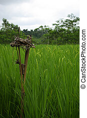 balinese, ricefield, offerta