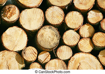 balk, kort, balk, timmerhout, hout