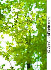 balken, von, der, sonne, leuchtet, trog, blätter, mit, grüner hintergrund