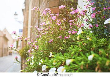 balkon, met, bloemen