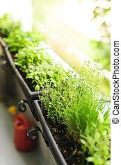 balkong, växt trädgård