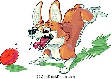 balle, chasser, chien, vecteur, corgi, dessin animé, rouges, heureux