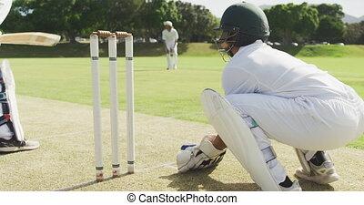 balle, détruire, timbres, joueur cricket, attraper