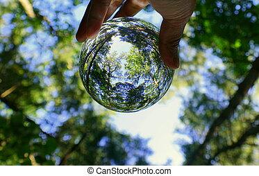 balle, forêt, vert, lentille, par, capturé, cristal