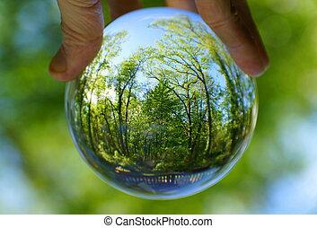balle, lentille, par, capturé, cristal, forêt verte