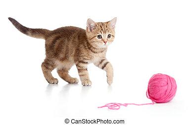balle, ou, isolé, britannique, clew, chaton, jouer, rouges