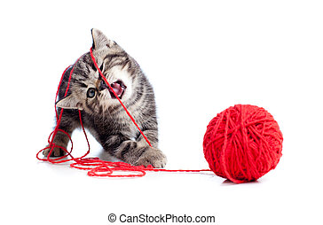 balle, tabby, clew, jouer, chaton, ou, rouges, gentil