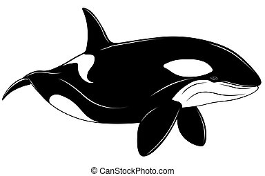 ballena, asesino