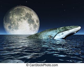 ballena, en, océanos, superficie, con, luna llena