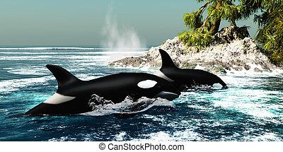ballenas, asesino, orca