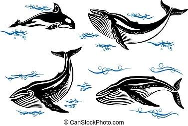 ballenas, caricatura, mar