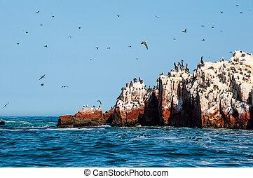 Ballestas Islands, Paracas National Reserve. Peru