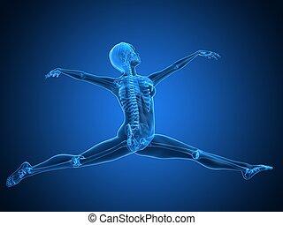 ballet dancer - 3d rendered anatomy illustration of a...