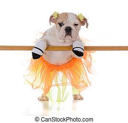 ballett tanzen, hund