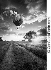 ballons air chauds, voler plus, lavande, paysage, coucher soleil, dans, noir blanc