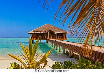 balneario, bar, maldivas, isla
