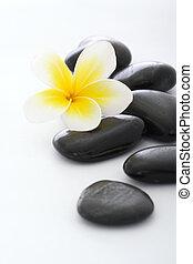 balneario, piedras, con, frangipani, blanco, plano de fondo