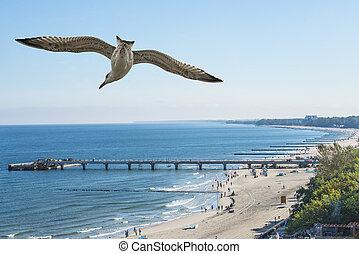 baltic, ポーランド, 浜, kolobrzeg, 海