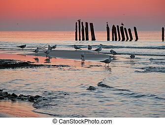 Baltic coast, at sunset.