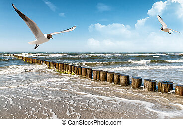 baltic sea coast motif from east germany in europe - the ...