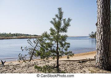 Baltic sea coast. Sunny summer day. Latvia. River called...