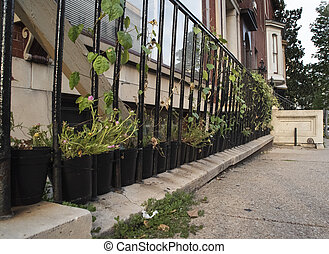 Baltimore Street Container Garden