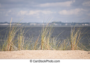 baltique, herbe, marram