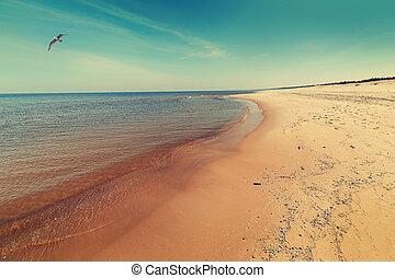 baltisch, sandstrand, meer