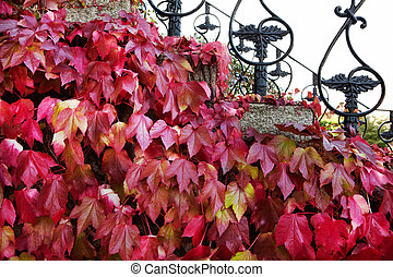 balustrade, noir, métal, vieux, pousse feuilles, gris, rouges, étapes, automne