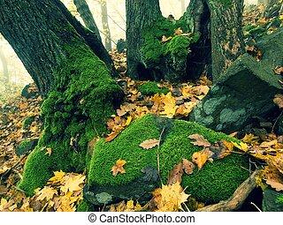 balvan, osika, barvitý, list, strom, čedič, strom, kopyto., les, pokrytý, popel, mechový, javor, nejdříve