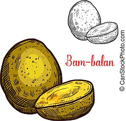 Bam-balan vector sketch yellow tropical fruit - Bam-balan...